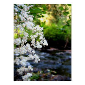 River Blossoms Poster