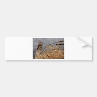 River Bumper Sticker
