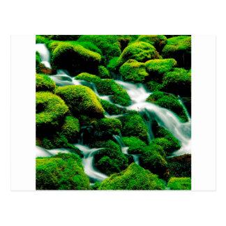 River Clear Falls Umpqua Forest Oregon Post Card
