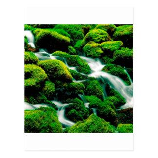 River Clear Falls Umpqua Forest Oregon Postcard