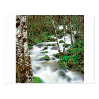 River Deltaalders Siskiyou Forest Oregon Postcard