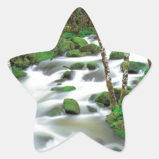 River Deltaalders Siskiyou Forest Oregon Stickers