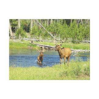 River Elk Canvas Print