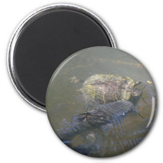 River Fish and Turtle Magnet