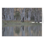 River Gums Greeting Cards