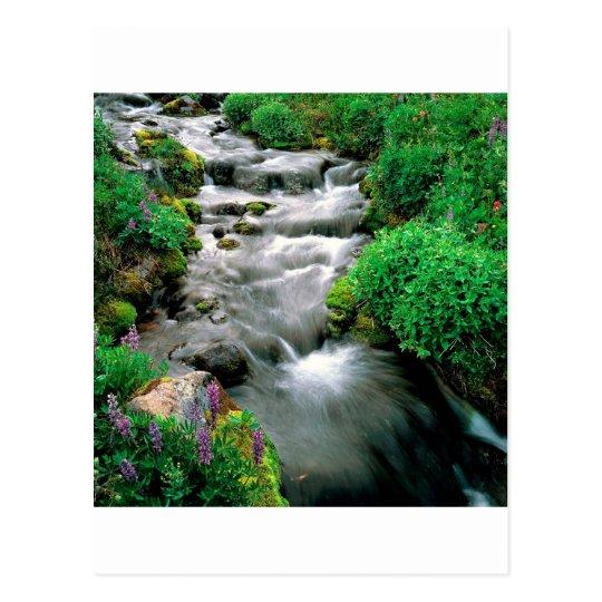 River Mount Adams Yakima Indian Reservation Postcard
