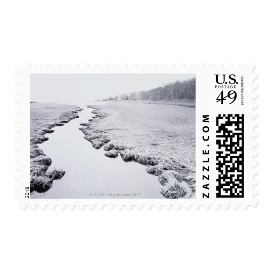 River Near Forest Postage
