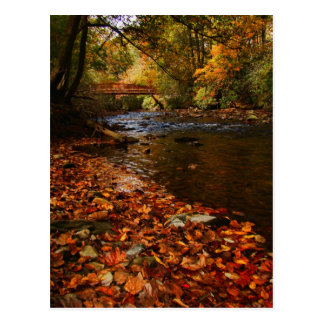 River of Leaves Postcard