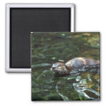 River Otter 2 Inch Square Magnet