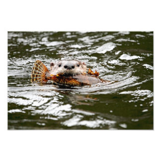 River Otter and Fish Photographic Print