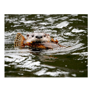 River Otter and Fish Postcard