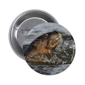 river otter pinback buttons