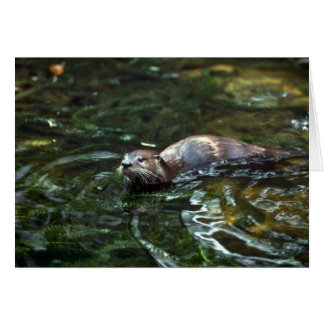 River Otter Cards
