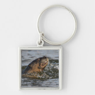River Otter Eating a Fish Keychain