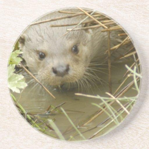River Otter Habitat Coaster