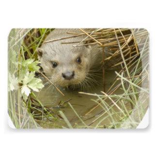 River Otter Habitat Cards