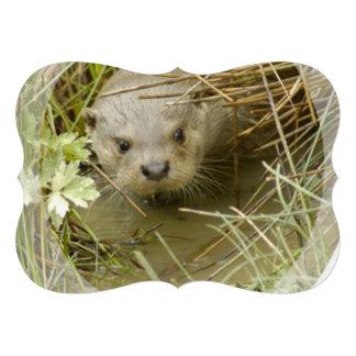 River Otter Habitat Card