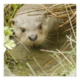 River Otter Habitat Invitations