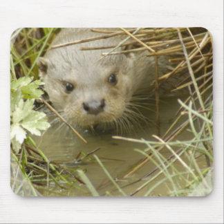 River Otter Habitat Mouse Pad