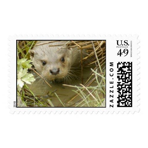River Otter Habitat Postage Stamp