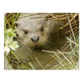 River Otter Habitat Postcard