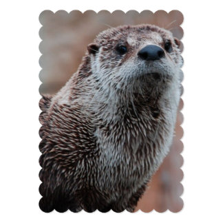 River Otter Card