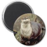River Otter Magnet