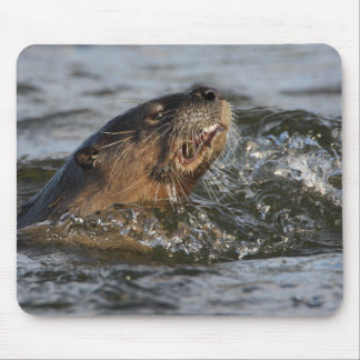river otter mouse pad
