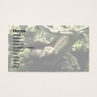 River Otter peering out of rocky den Business Card
