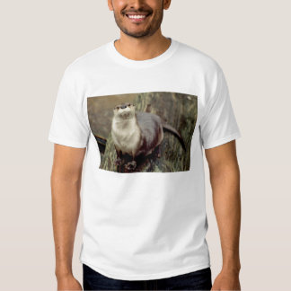River Otter Posing Tee Shirt