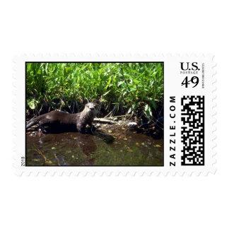 River Otter-summer Postage Stamps