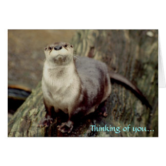 River Otter, Thinking of you... Cards