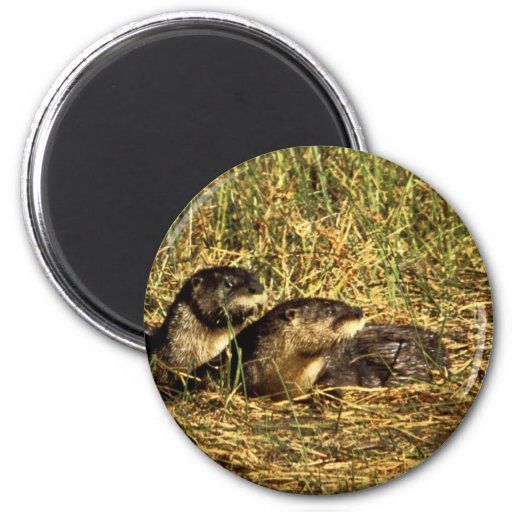 River Otters Fridge Magnet