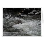 River Rapids Card