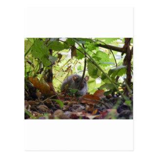 River rat postcard