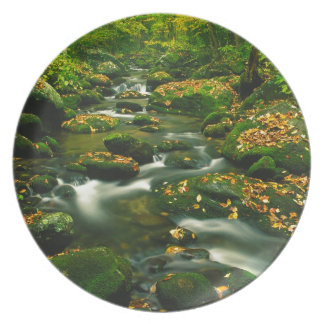 River Roaring Fork Exposure Smoky Tennessee Dinner Plates