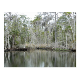 River Scene from Wakulla Co Florida Postcard