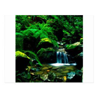 River Steep Ravine Mount Tamalpais Postcard
