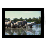 River Walking Horses Card