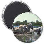 River Walking Horses Magnet