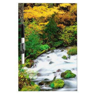 River Willamette Forest In Autumn Oregon Dry Erase Board