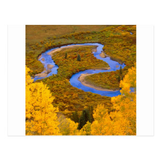 River Winding Gunnison Forest Colorado Postcard
