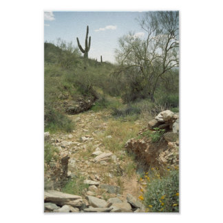 Riverbed Rembrance Sonoran Desert Art Print Poster