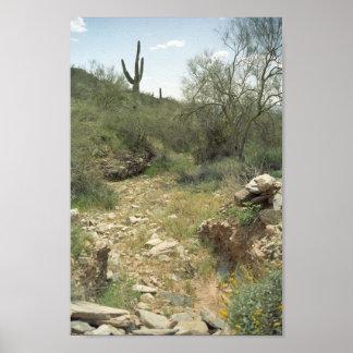 Riverbed Rembrance Sonoran Desert Art Print Poster