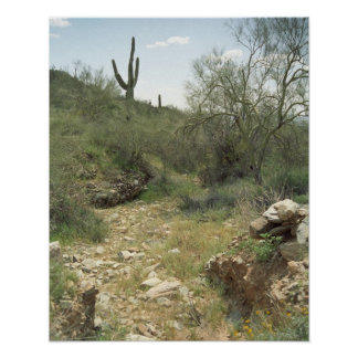 Riverbed Rembrance Sonoran Desert Poster Art Print