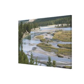Rivers run through a lowland section of Jasper Canvas Print