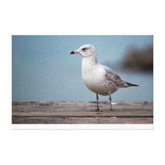 Riverside Seagull Canvas Print