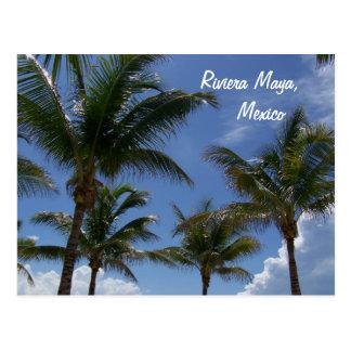 Riviera Maya Cancun Mexico Caribbean Palm Trees Postcard