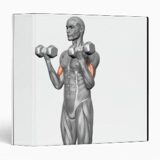 """Rizo derecho 2 del bíceps carpeta 1 1/2"""""""