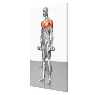 Rizo derecho 2 del bíceps lona envuelta para galerías